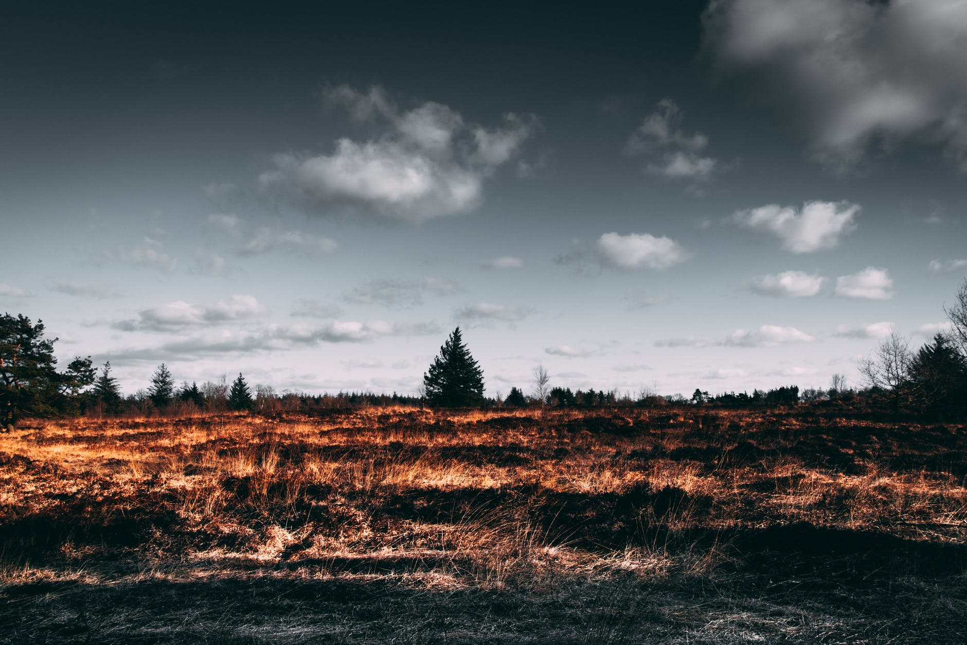 brown open field